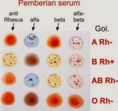 rh negative blood type dating