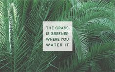 Greener.jpg (2560×1600)