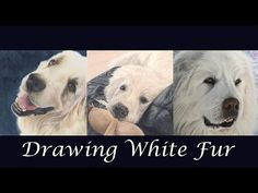 TUTORIAL #3- How to draw White Fur in color pencils - Channel Sheldene F...