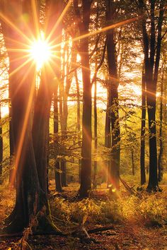 Starshine by Thinking-Silence Evening light in the forest Nature Pictures, Cool Pictures, Beautiful Pictures, Terre Nature, Forest And Wildlife, Magical Forest, Nature Aesthetic, Nature Scenes, Beautiful World