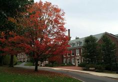 Fall on the Tufts campus