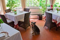 Jai Alai: un restaurante con mucha historia y muchas historias caninas.