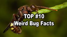 Insects are efficient and compassionate, ruthless and sharply intelligent. But our resident expert has come up with a few facts about them that shine a littl...
