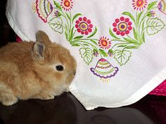 """Surface """"Free Style"""" Hand Embroidery – Needle'nThread.com"""