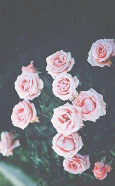 Read Fondo de palmas from the story Fondos de pantalla - Wallpapers by Zendayabeella ( Cute Desktop Wallpaper, Iphone 6 Plus Wallpaper, Mood Wallpaper, Trendy Wallpaper, Pink Wallpaper, Cute Wallpapers, Wallpaper Backgrounds, Pink Tumblr, Roses Tumblr