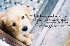 I sit here & wonder...<3 a dog