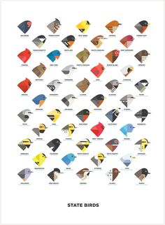 The 50 state birds, ordered by their state's admittance into the Union.