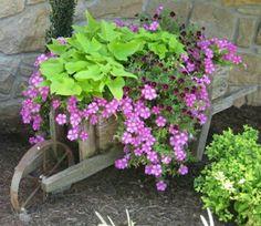 Sweet potato vine, wave petunias and million bells in a wheel barrow.             www.ahouseinbloom.com