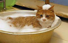 14-chats-qui-aiment-l-eau-17 20 chats qui aiment l'eau