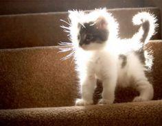 Electrified kitten.
