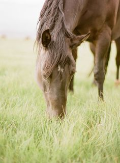 Horse in dreamy lush grass field