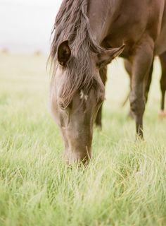 Horse in dreamy lush grass field