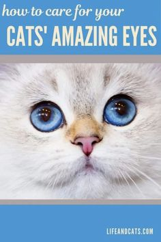 Tips on how to care for your cat's eyes. Home care for your cat's eyes. Treat simple infections at home. How to clean your cat's eyes. Cat Eye Problems, Cat Eye Infection, Information About Cats, Watery Eyes, Kitten Care, Cat Care Tips, Cat Behavior, Cat Grooming, Cat Health