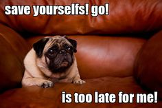 Is too late for me! Pugs have a variety of facial expressions. For that reason, pug memes are funny and I hope these 101 dog memes featuring pugs bring a smile to your day! Pug Pictures, Funny Animal Pictures, Funny Animals, Cute Animals, Baby Animals, Animal Babies, Funny Dog Memes, Funny Dogs, Cat Memes