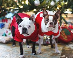 dress+up+pets+for+Christmas | Found on au.lifestyle.yahoo.com