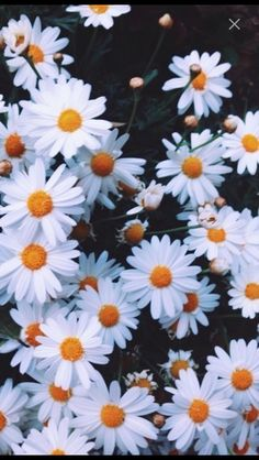 Find images and videos about flowers, wallpaper and background on We Heart It - the app to get lost in what you love. Aestheticly Pleasing, Plant Wallpaper, Aesthetic Wallpapers, Pixel Art, Cool Pictures, Floral, Creative, Prints, Nature