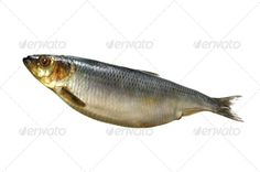 Realistic Graphic DOWNLOAD (.ai, .psd) :: http://hardcast.de/pinterest-itmid-1006968939i.html ... Smoked Mackarel Isolated On White ...  Mackerel, bleached, fish, food, full, gourmet, healthy, ingredient, isolated, kipper, meal, nature, nordic, saline, salt, seafood, shopping, smell, smoke  ... Realistic Photo Graphic Print Obejct Business Web Elements Illustration Design Templates ... DOWNLOAD :: http://hardcast.de/pinterest-itmid-1006968939i.html