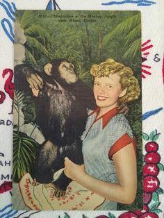Vintage Florida Monkey Jungle linen postcard by 3floridagirls