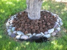 Pine cone mulch...  neat idea..  and I have plenty of pinecones!!!