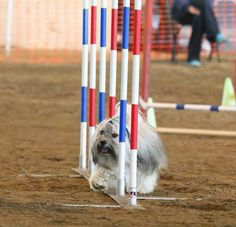 To Dog With Love: How to Make 2 x 2 Agility Weave Poles #BlogPawsDIY...