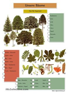 Можно использовать в лесу для ознакомления с деревьями и растениями.
