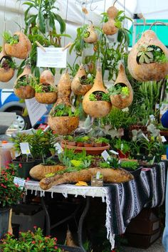 Sharing Nature's Garden...I don't know where to start...the gourd planters are nice.