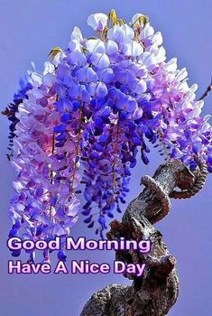 Yesterday is gone , tomorrow is mystery, Today is blessing . Good Morning Gif Images, Romantic Good Morning Quotes, Good Morning Beautiful Pictures, Good Morning Quotes For Him, Good Morning Texts, Good Morning Picture, Good Morning Messages, Good Night Image, Morning Pictures