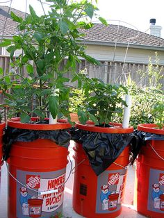 earthbox: A low-cost, self-watering planter Bucket Gardening, Container Gardening, Gardening Tips, Gardening Books, Watering Tomatoes, Decoracion Low Cost, Self Watering Containers, Diy Self Watering Planter, Succulent Containers