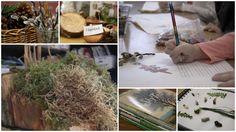 Exploring Trees Through Inquiry: A Reggio Inspired Unit