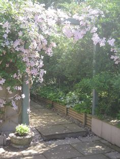 Clematis Montana and arch