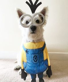 - Tap the pin for the most adorable pawtastic fur baby apparel! Youll love the dog clothes and cat clothes! Minion Dog Costume, Cute Dog Costumes, Pet Halloween Costumes, Dog Halloween, Dogs In Costumes, Zombie Costumes, Halloween Couples, Group Halloween, Homemade Halloween