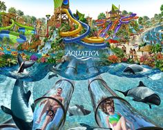 Visit Aquatica, Sea World's Waterpark. This amazing waterpark is located just across the street from SeaWorld. Aquatica Orlando is open year-round, with seasonally heated pools. Aquatica Orlando A… Seaworld Orlando, Orlando Parks, Orlando Travel, Orlando Vacation, Florida Vacation, Florida Travel, Orlando Florida, Vacation Spots, Orlando Disney