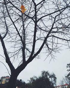 "44 Gostos, 1 Comentários - Adriana Oliveira (@mundoflo) no Instagram: ""Christmas postcard #autumninthecity #rainyday #baretrees #treebranches #Leiria #leiriacastle…"""