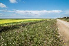 Prado, Daisy, Country Roads, Scenery, Daisy Flowers, Daisies, Bellis Perennis