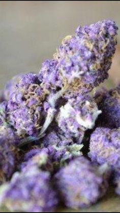 Bud porn  ~ marijuanachecks.com ~ Like our fb page at http://facebook.com/legalizationchecks