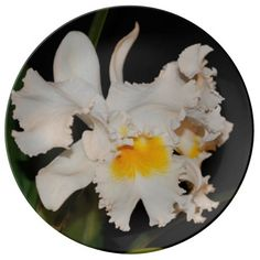 White cattleya orchid tropical flower in bloom