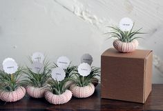 sweet and sustainable - air plants as favours and place cards