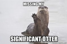 what even are these otter puns