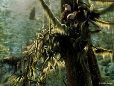 Beautiful Wildlife Paintings by Collin Bogle