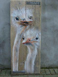 Résultats de recherche d'images pour «autruches australie»