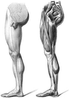 Músculos brazos 4