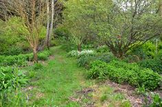 How to start a forest garden from scratch
