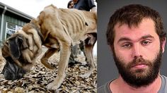 PETITION, PLEASE SIGN AND SHARE! Max penalty for South Carolina man that starved dog for weeks! | YouSignAnimals.org