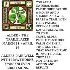 The Celtic Tree Zodiac | PlayBuzz