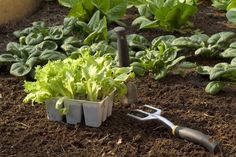 NEED TO DO===succession planting