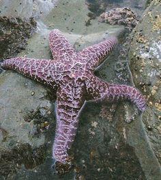 la stella che c'è nel mio mare