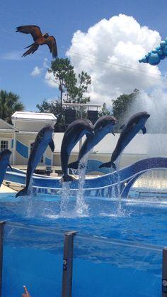 Dolphins at Sea World, Orlando, Florida