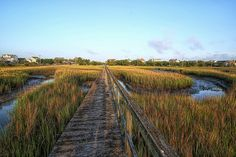 A Local's Guide to Pawley's Island, SC