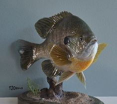 Minnesota Fishing Reports Outdoor Forums - All Posts Fish Wood Carving, Wood Carvings, Fish Mounts, Fishing Report, Fish Patterns, Fish Art, Funny Art, Taxidermy, Art Reference