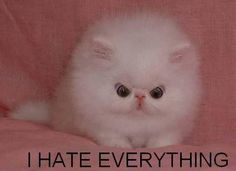 This kitty is so cute, but looks so angry!